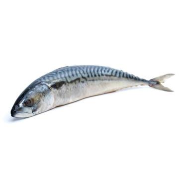 Hele makreel